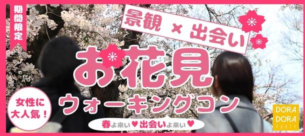 お花見の名所で出会おう☆自然に距離が縮まる!春の桜探索ウォーキング街コン