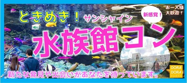 【完売】サンシャイン水族館デート新感覚街コン